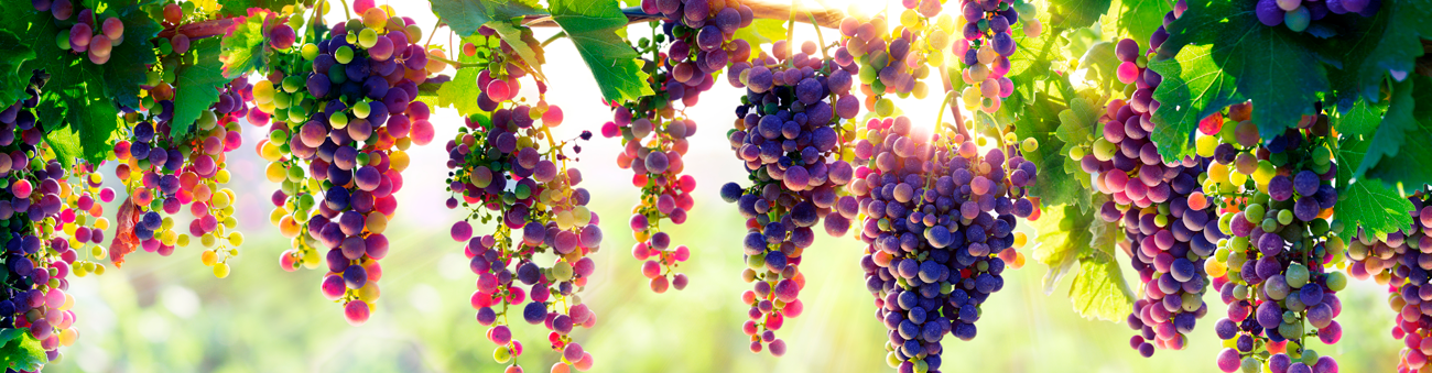 wine_pairing_grapes
